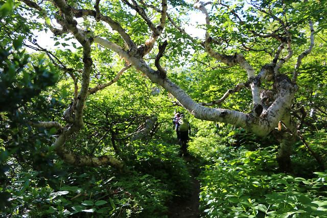 2014-07-21_01687_北海道登山旅行.jpg