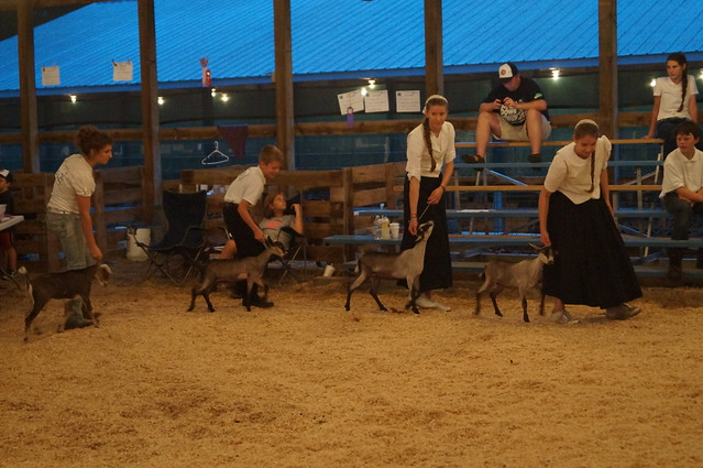 4H Fair Week: Day 2