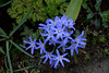 Blue Flowers by VinayakH