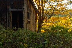 Sunshine by the Old Barn