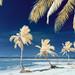Paradise in IR