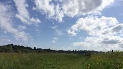 Godalming meadow