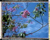 Pink Trumpet Tree by tobysx70