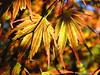 glowed summer kubota garden