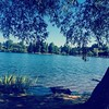 Had a pretty blissful walk around Greenlake this morning even though half the city was there with us.