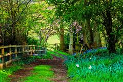 Cheshire Walks #5,#6