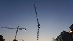 DC Dance of the Cranes 59095