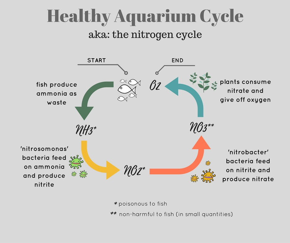 How to fishless cycle a new aquarium spec tanks diagram showing nitrogen cycle of healthy aquarium ccuart Gallery