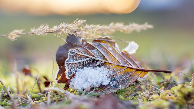 A winter still life...