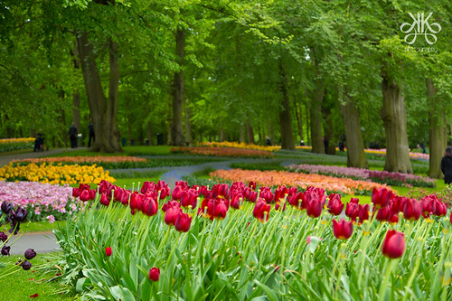 Kaukenhof-tulip-garden-Holland-KaynatKazi Photography-2016 (48 of 48)