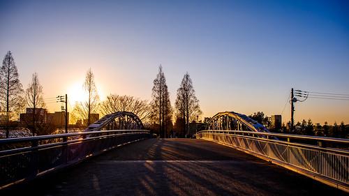 nikon d3s af afs nikkor 24 24mm f14g f14 14 ed tsurumi ryokuchi green park osaka japan sky branch tree blue sun outdoor silhouette shadow gradation bridge sunset