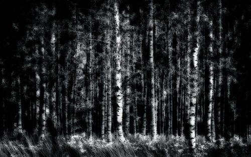 trees blackandwhite bw abstract monochrome forest skåne woods sweden ominous skog birch björk