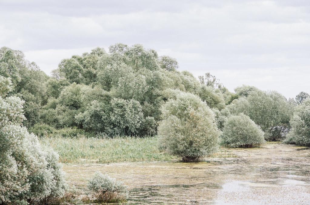 Tourisme vert en Haute Marne - Coup de chaud au paradis - Sur les bords du lac du Der