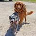 Missouri Dogs