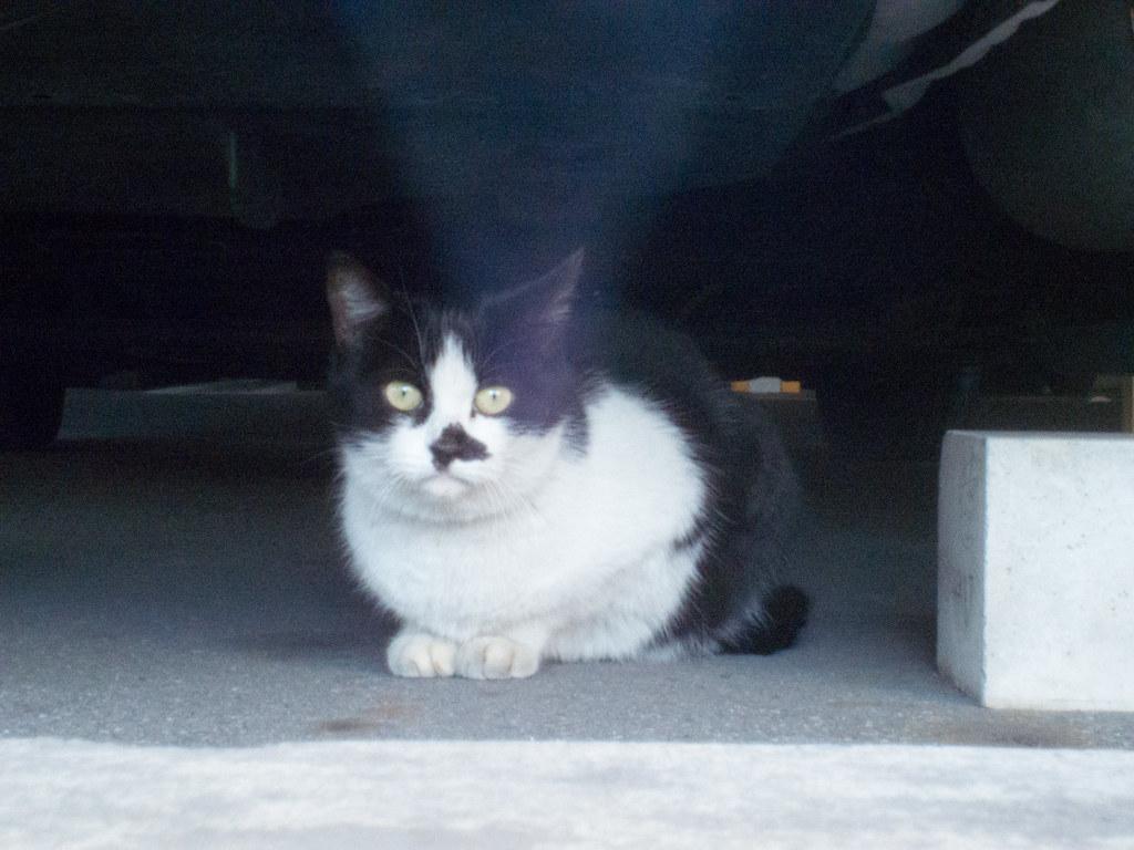 Stray cat f/16