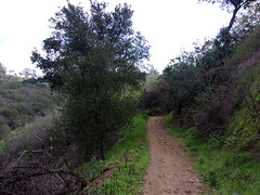 Trail into Lower Turnbull Canyon (Near Turnbull Canyon Road)- 1/18/17