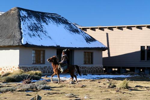 Pony trotting, Lesotho