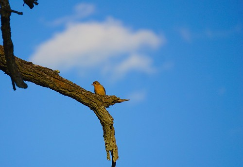 A little birdie 1