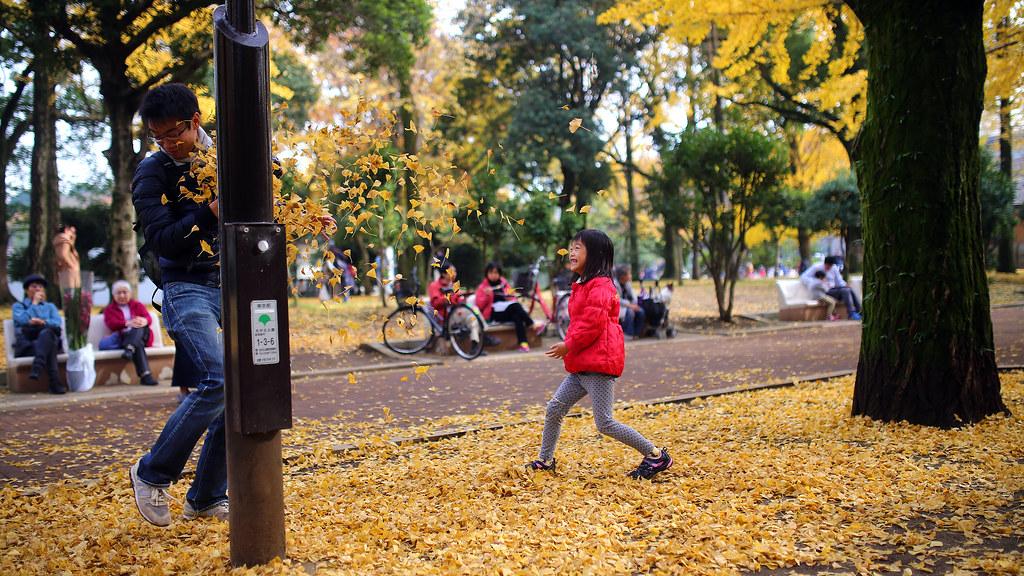 光が丘公園 Tokyo, Japan / Sigma 35mm / Canon 6D 銀杏攻擊,這應該是我打最短的文字吧。  那就靜靜的看吧!在 2016 年的最後一天。  Canon 6D Sigma 35mm F1.4 DG HSM Art IMG_9278_16x9 Photo by Toomore