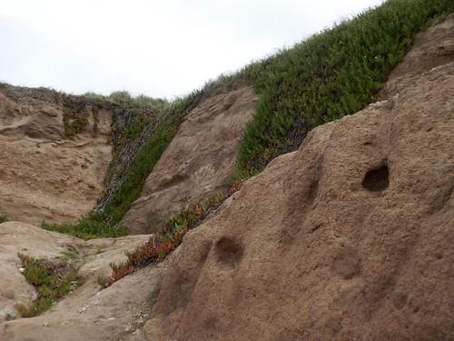 Madrigueras de roedores plio-pleistocenos