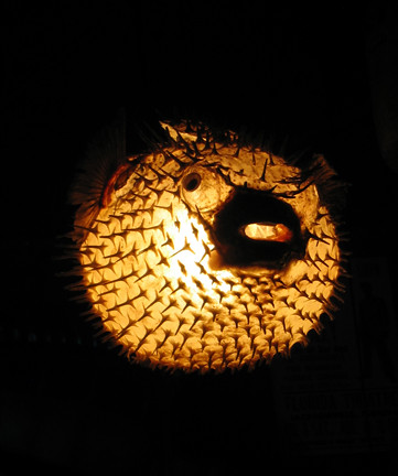 puffer fish lamp flickr photo sharing