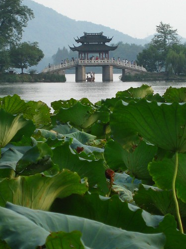 Lotus in Hang Zhou