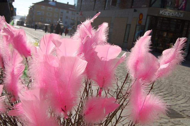 Rosa fjädrar