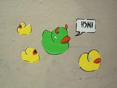 Bird flu hits edinburgh!