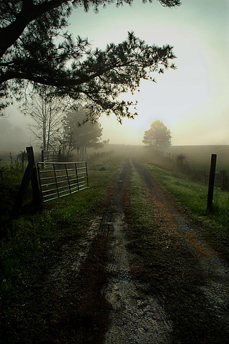 road trees mist green sunrise fence gate 500v20f blountcountyalabama nailbender jdmckinnon