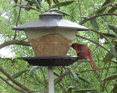 tool(0.0), animal fat(0.0), bird feeder(1.0),
