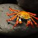 crabbbbbb by zrim