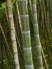 branch(0.0), plant(0.0), plant stem(0.0), bamboo(1.0), tree(1.0), green(1.0), trunk(1.0), cane(1.0),