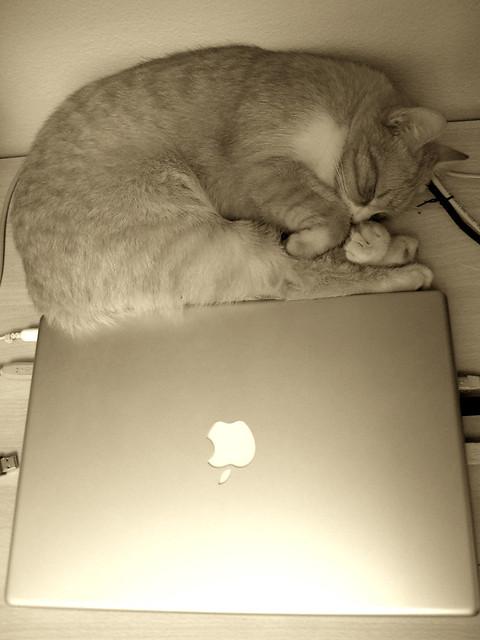 Mac-Cat