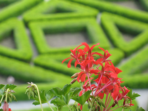 Flowers and a labirint.jpg