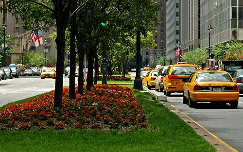 Park Ave by Alida's Photos
