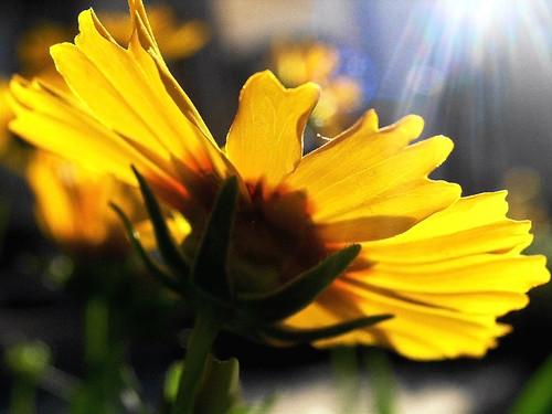 Eternal Sunlight