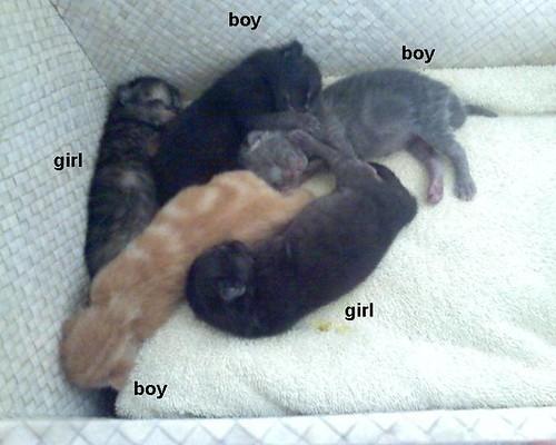 kittens2label