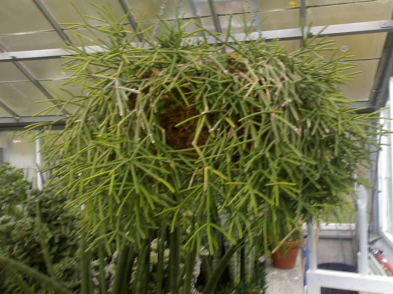 Plant at Allan Gardens Conservatory