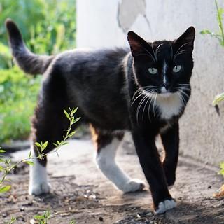 Котик, гуляющий сам по себе. #кот #cat