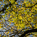 Autumn leaves on Lewesdon Hill-2