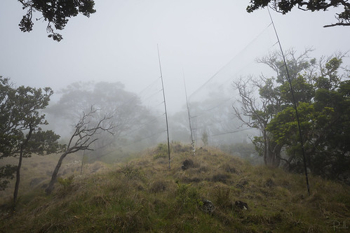 Mist nets in Nakula Natural Area Reserve
