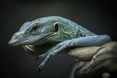 Emerald Monitor Portrait