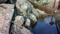 Steatite Soapstone Outcropping