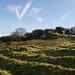 Waddon Hill fort