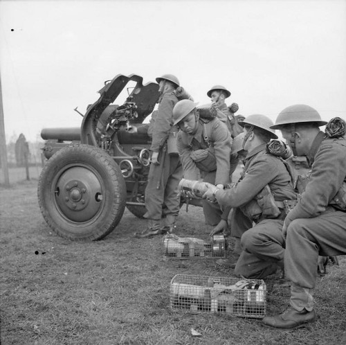 Gunners of the 1st Heavy Artillery Regiment (1st Polish Corps) manning a QF 4.5 inch Howitzer on a training exercise near St Andrews in Scotland 1939-1944.