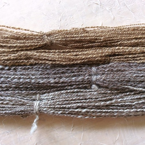 Adventures in spindle spinning, plying, and dyeing: mixed BFL dyed with hickory (top) and undyed (bottom) #tourdefleece #tourdefleece2015 #spinning #spindlers #spindlespinning