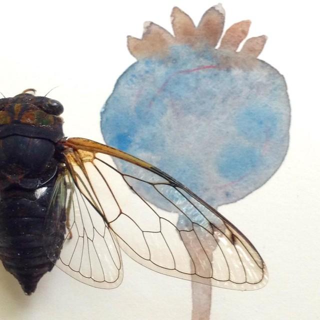 cicada and poppy pod