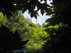 Ιούνιος, καλοκαίρι, Ψίνθος 2015