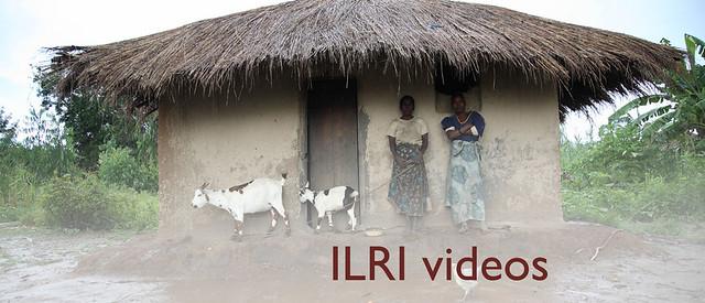 ILRI videos