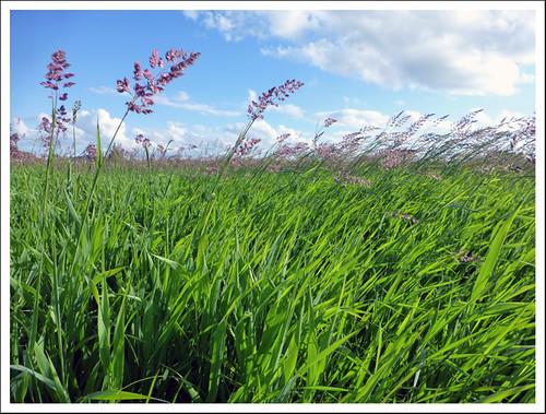 landscape johncarey cabraghwetlandsthurlesskynaturewildlifesummertipperaryirelandirish